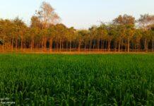হোগলবাড়িয়া গ্রাম মটমুড়া