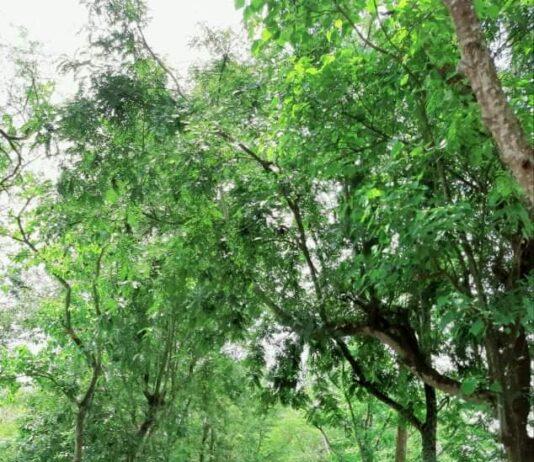 পাঁচশিশা গ্রাম ধারাবারিষা ইউনিয়ন